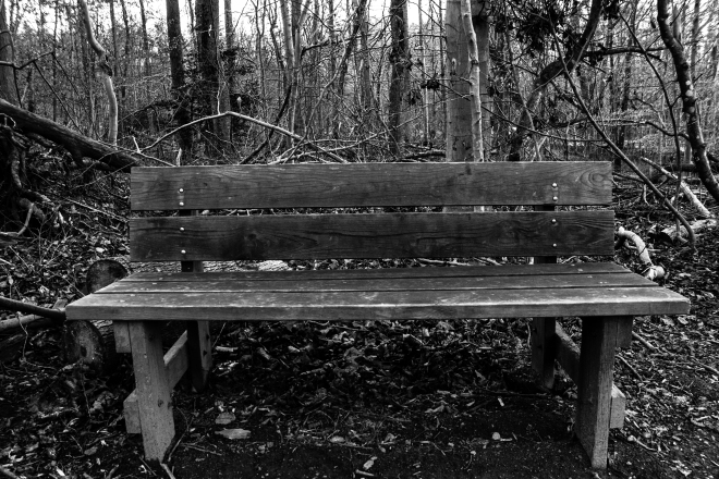 bench, woods, day