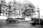 Trees, Cars and Bus Stop, Black and White (2013)
